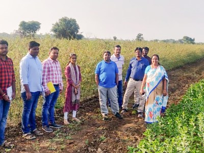 Researchers from ARS Tandur, IIPR Kanpur and ICRISAT monitoring progress in collaborative projects.
