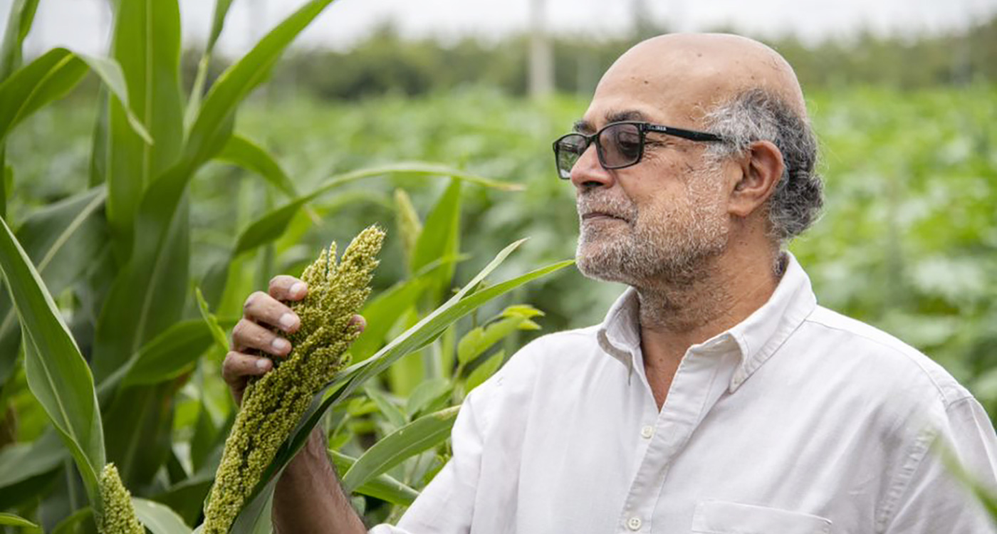 ICRISAT Governing Board Chair inspects a sorghum panicle at a demo rainfed plot at the ICRISAT heritage watershed site. Photo: S Punna, ICRISAT