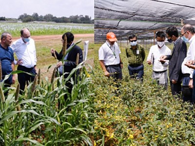 The delegation from Uzbekistan inspect pearl millet and pigeonpea crops in demonstration plots. Photos: PS Rao, ICRISAT