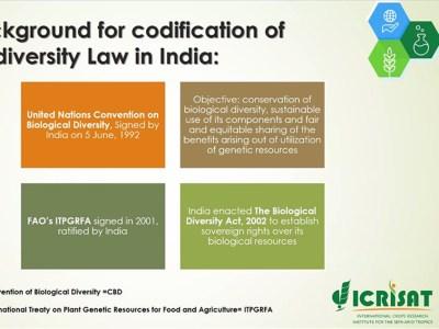 Dr Tripathi speaking during the webinar. Photo: ICRISAT