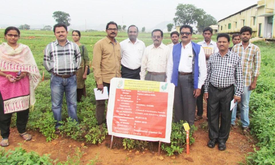 Monitoring of MABC trials at Agricultural Research Station, Kadiri, Andhra Pradesh, India. Photo: Dr KSS Naik