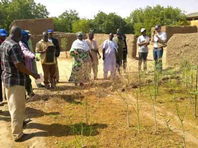 Field visit to an agroforestry food bank managed by the women group in Toroli village. Photo: M Petri, ICRISAT