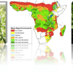 3 Uncommon Ways ICT Can Aid Delivery of High Impact Agricultural Research and Development