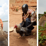 Showcase Your Digital Agriculture Impact to USAID and Gates Foundation