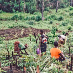 6 Takeaways From COVID-19 Remote Data Collection in Rural DRC
