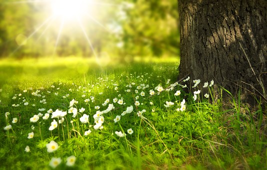 taichi parco verde