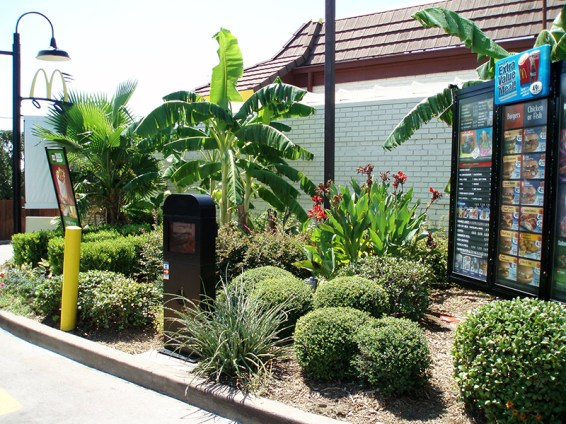 Palm-Trees-Banana-Trees-Yuccas.jpg