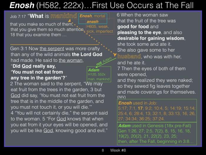 Book of Job, Week #8 LB .008