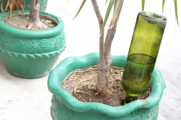Make-Wine-Bottle-Plant-Waterer-Step-8