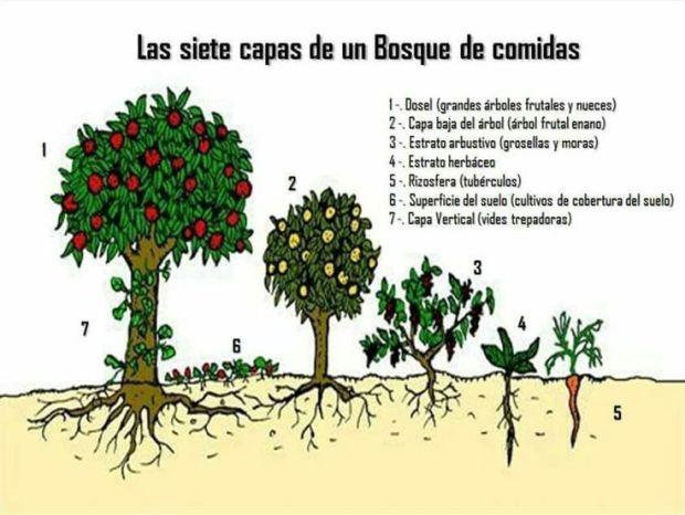 dibujo-esquema-bosque-comestible