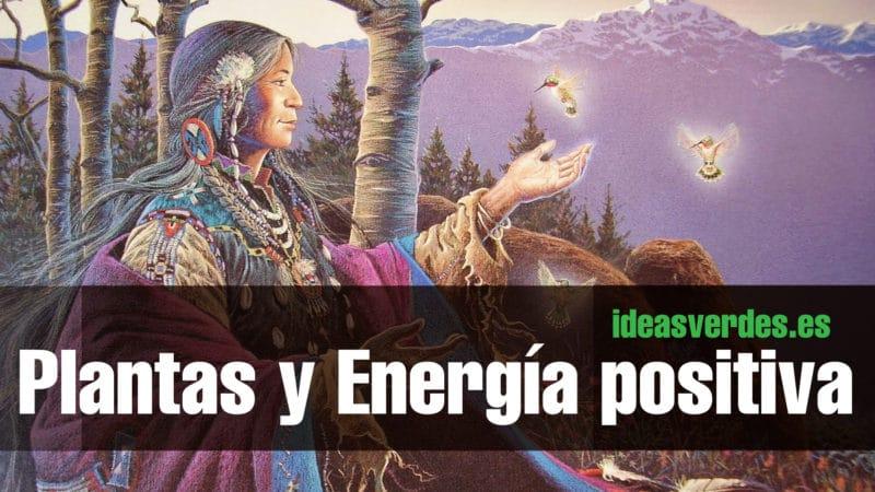 50 plantas que atraen energ as positivas seg n la - Energias positivas en las personas ...