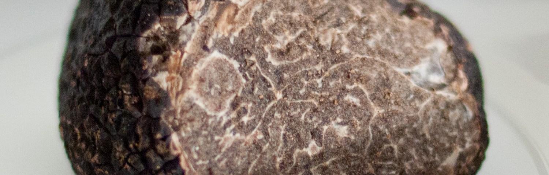Truffe noire zoom