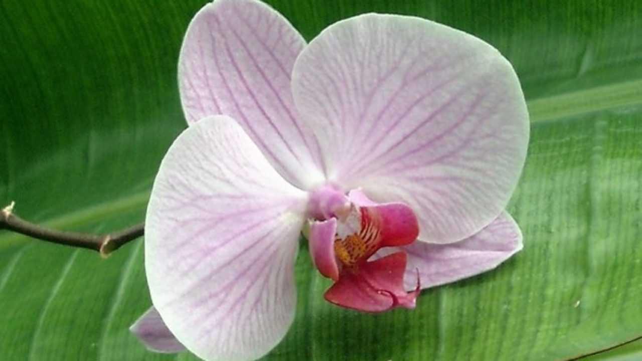 Terriccio Per Orchidee Fai Da Te Idee Green