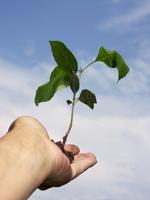 Liderança, Desenvolvimento Pessoal, Compromisso, Coaching, Liderar Com o Coração