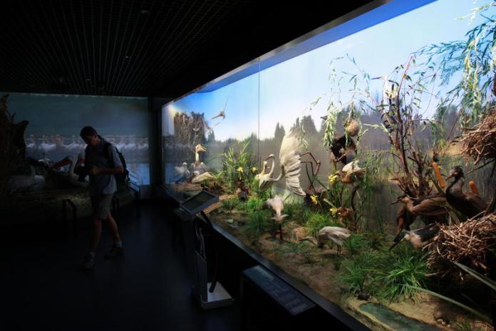muzeul-antipa-diorama-delta-dunarii