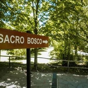 parco-dei-mostri-bomarzo-bosco-sacro