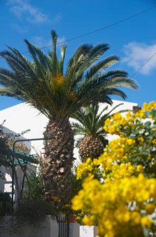 panormo-palm_15466865071_o