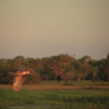 Across the wetlands