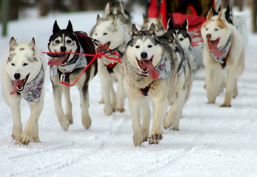 https://i1.wp.com/www.iditarodalaska.net/images/stories/iditarodfaq3.jpg
