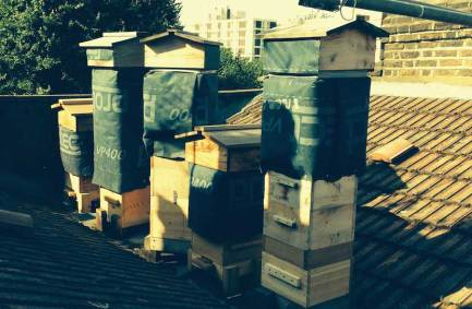 Bill's urban apiary