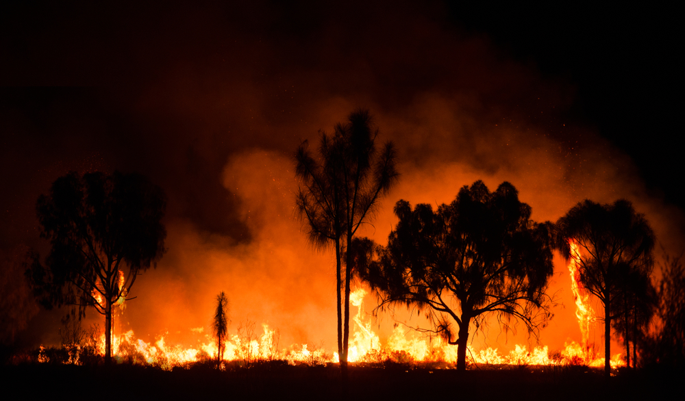 shutterstock_1437869741 Scam Alert: Australian Fire Fundraising Scam