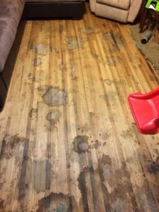 Heavily pet stained floors after removing carpet