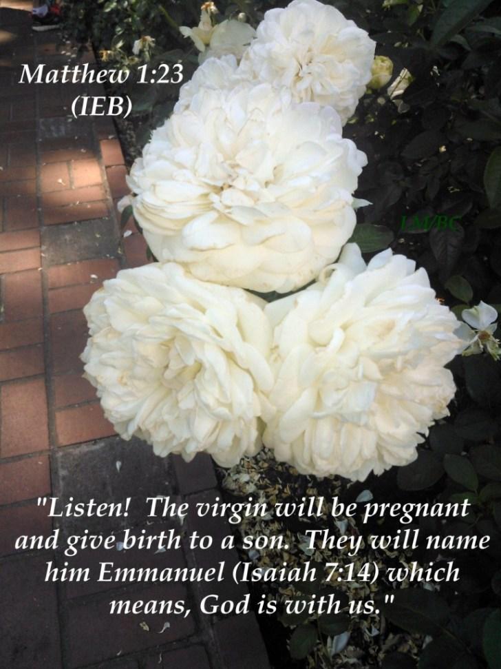Emmanuel - Matthew 1_23 IEB - image
