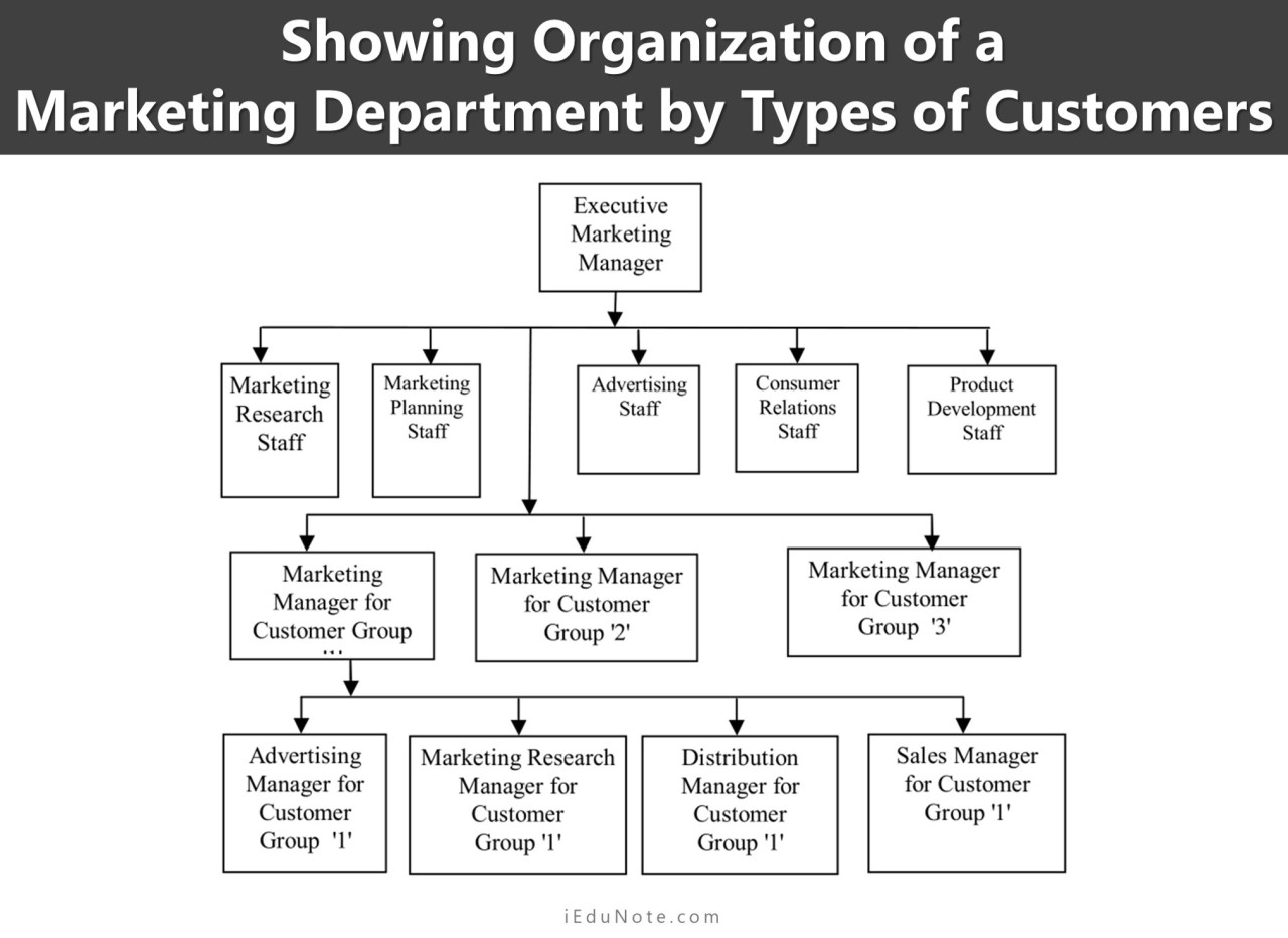 Showing Organization of a Marketing Department by Types of Customers