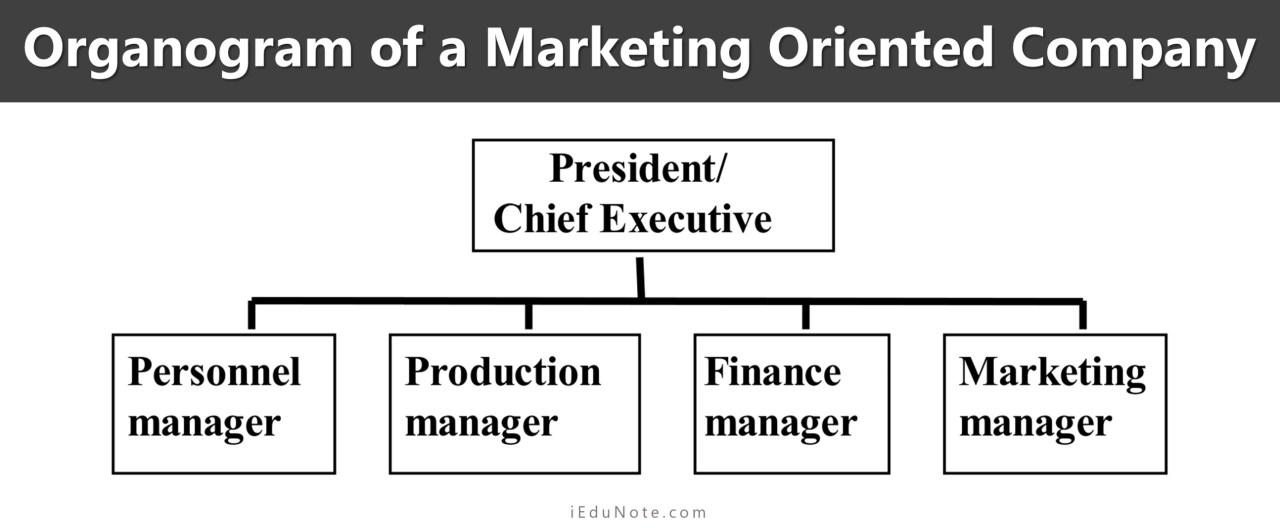 Organogram of a Marketing Oriented Company