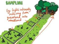 Area Sampling