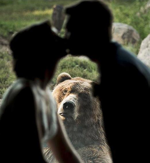 Η αρκούδα που έγινε viral δείχνει απορημένη μπροστά στο ζευγάρι που φιλιέται.