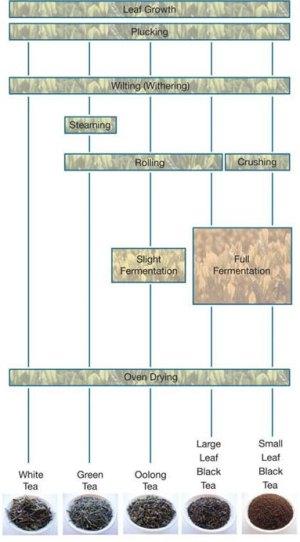 IELTS Process Writing Sample