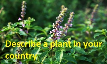 Describe a plant in your country Speaking IELTS EXAM
