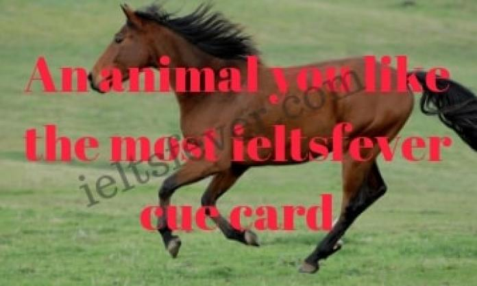 An animal you like the most ieltsfever cue card