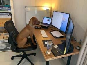 environmental home office boss