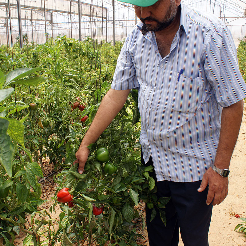 iF Charity - Palestinian Farmer showing his crops