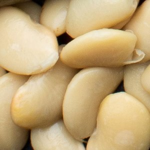 Butter Beans in Water - Wholesale 2.5kg Tin