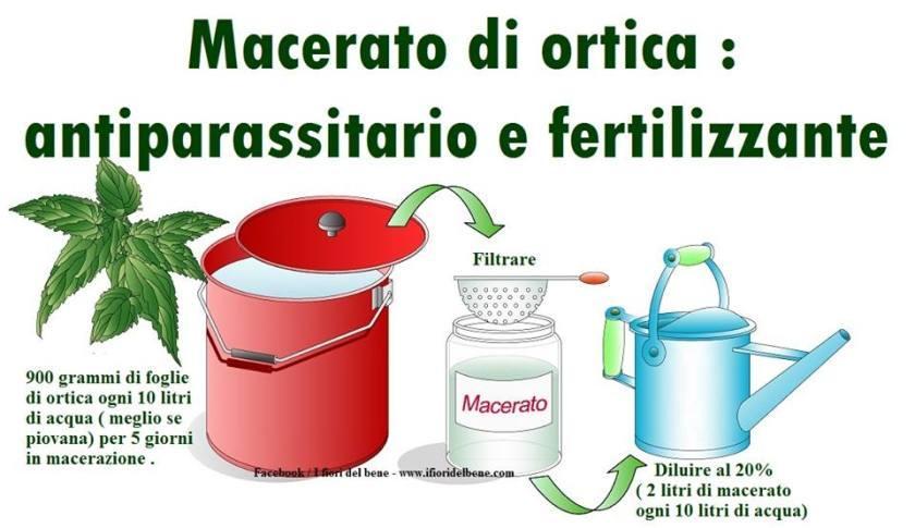 antiparassitario e fertilizzante naturale ottenuto dalla macerazione dell'ortica