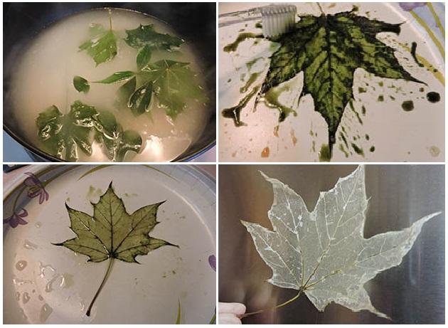 come fare scheletri di foglie