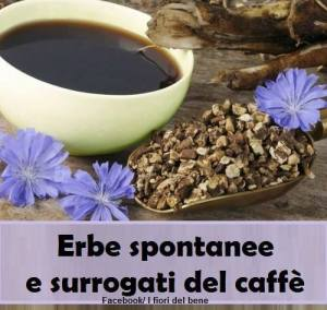 Erbe spontanee e surrogati del caffè