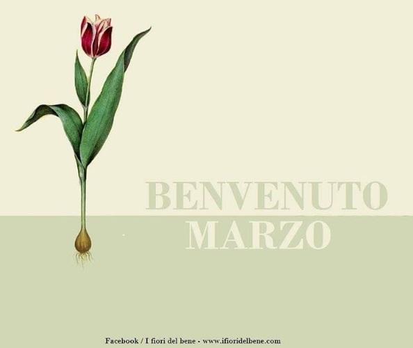 Semine e lavori di marzo i fiori del bene for Semina arachidi