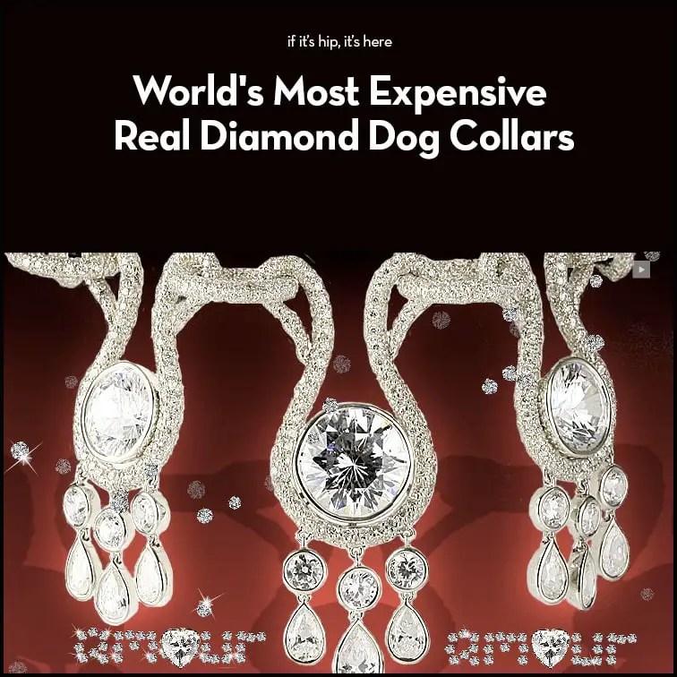 Real Diamond Dog Collars
