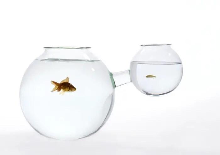 30fishbowl-xs or xl
