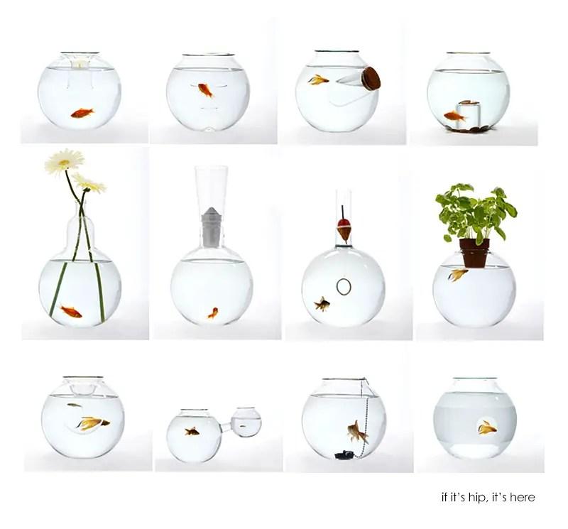 roger arquer fish bowls
