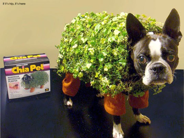 chia-pet-halloween-dog-costume