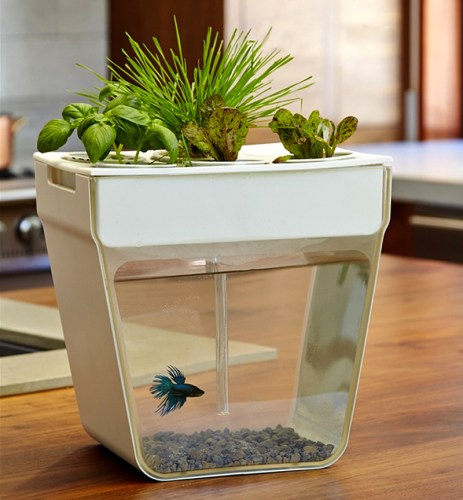 Read more about the article The Aquafarm Is A Self-Cleaning Fish Tank And Herb Garden In One.