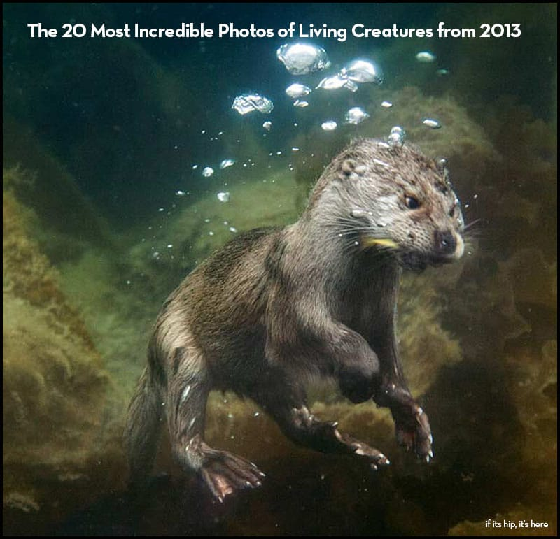 20 most incredible photos of living creatures from 2013