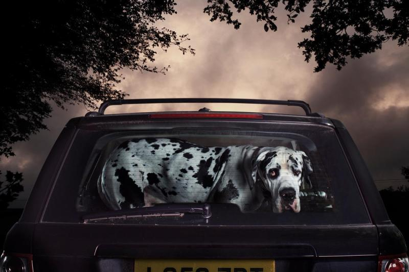 The Silence Of Dogs In Cars by Photographer Martin Usborne