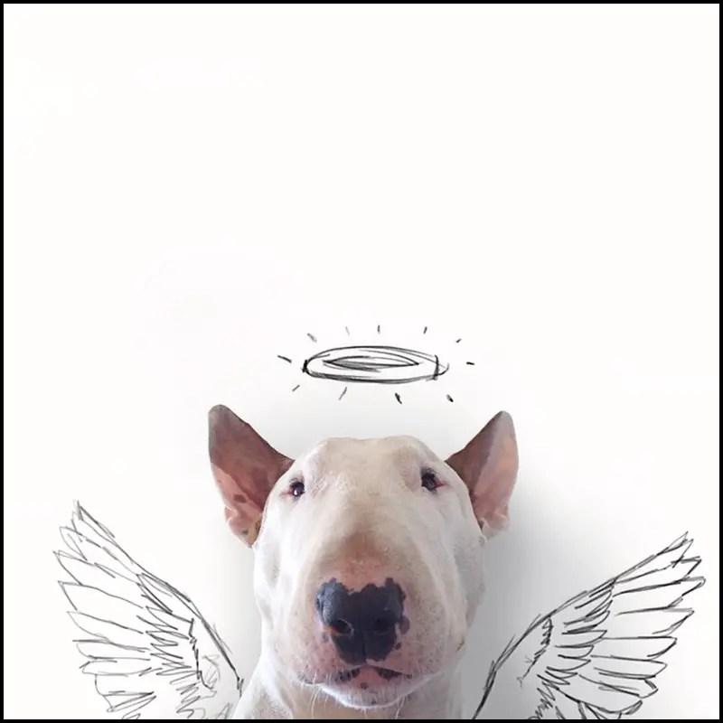 bull terrier & Illustrator