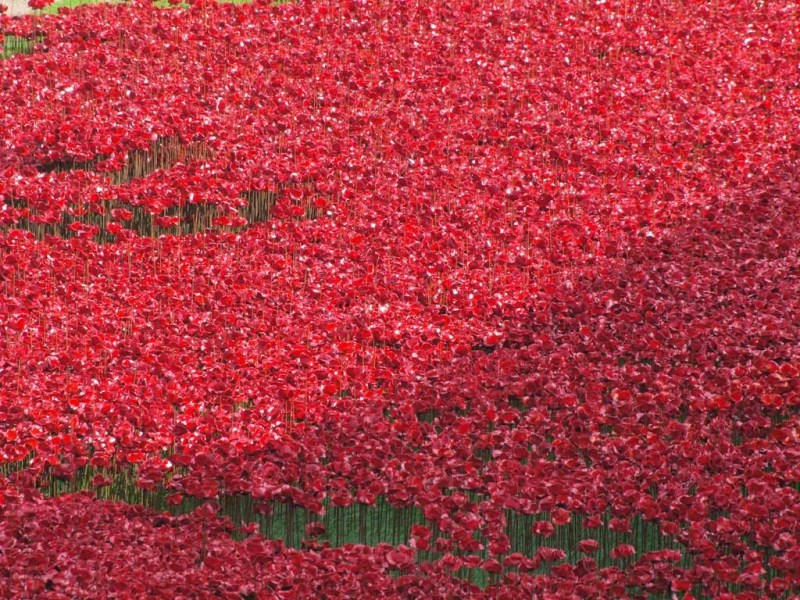 Poppies Overtake The Tower of London
